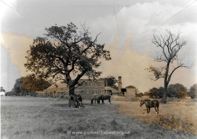 Horses in the field opposite Mr Woods house (photographer)