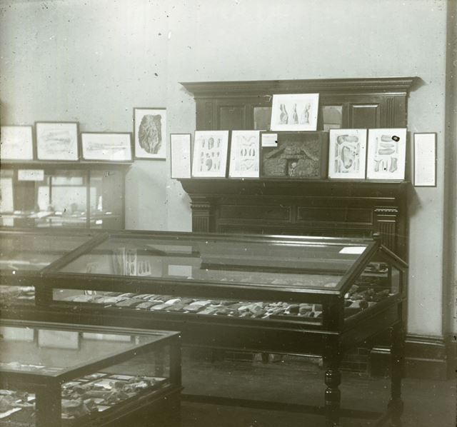 Interior of Buxton Museum and Art Gallery - Sir WILLIAM BOYD DAWKINS room