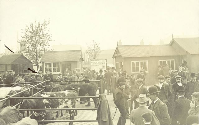 Chesterfield Cattle Market