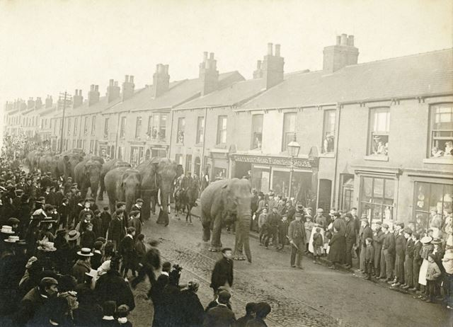 Parade of Barnum and Bailey's Circus elephants, these ran after the camels and just before the child