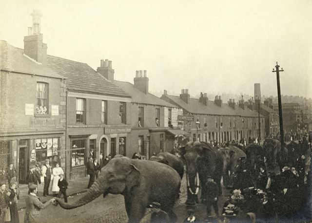 Parade of Barnum and Bailey's Circus elephants (who were performing at Sheffield on December 8 1899)