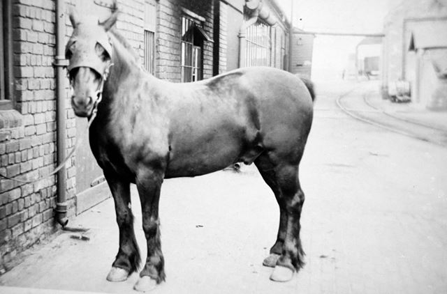 Pit Pony at Ireland Colliery