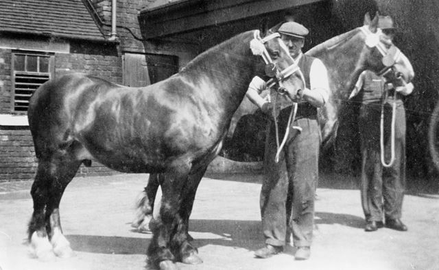 Pit Ponies at Ireland Colliery