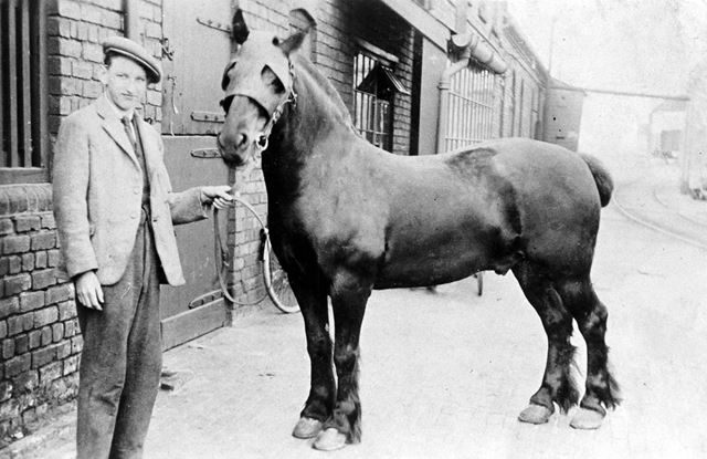 Ken Brownlow with Pit Pony at Ireland Colliery