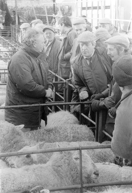 Old Cattle Market - Sheep auction