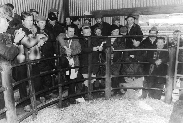 Old Cattle Market auctions