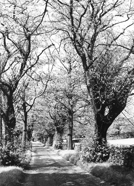 Trees in Mellor
