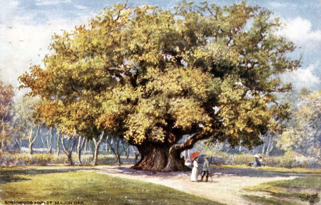 The Major Oak, Sherwood Forest, Edwinstowe, c 1900