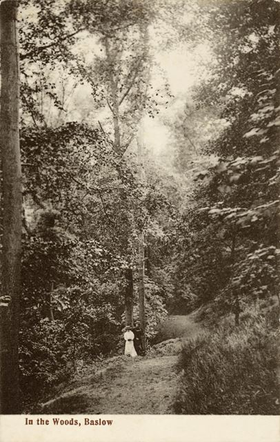 'In the woods' - Yeld Woods, Baslow
