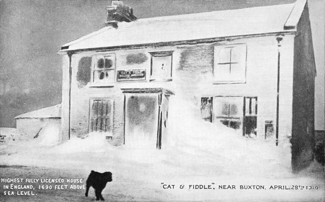 A dog in the (un-seasonal) snow outside The Cat and Fiddle Inn, near Buxton