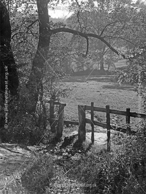 A scene in Eckington Woods