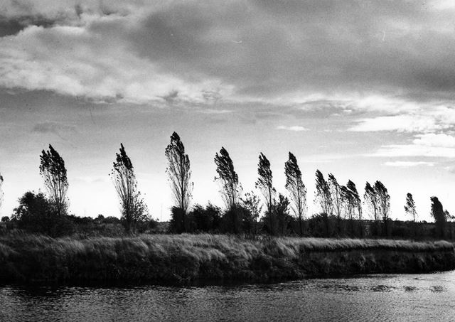 Trees by the river at Barrow-on-Trent