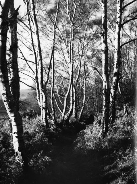 Trees by the walk to Horsley Castle
