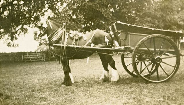 Ashover Show - First Prize for Decorated Turn out (from Hilltop Farm, Ashover), 1928