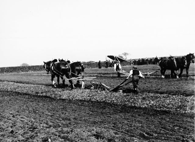 Ploughing match, Rowsley, early 20th century