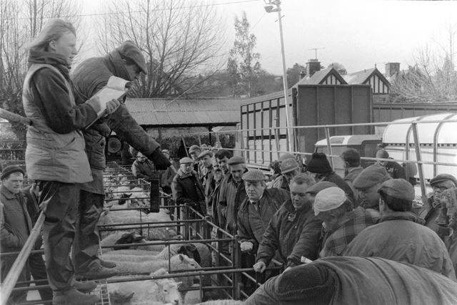 Sheep auction, Old Bakewell Livestock Market, Bakewell, 1996