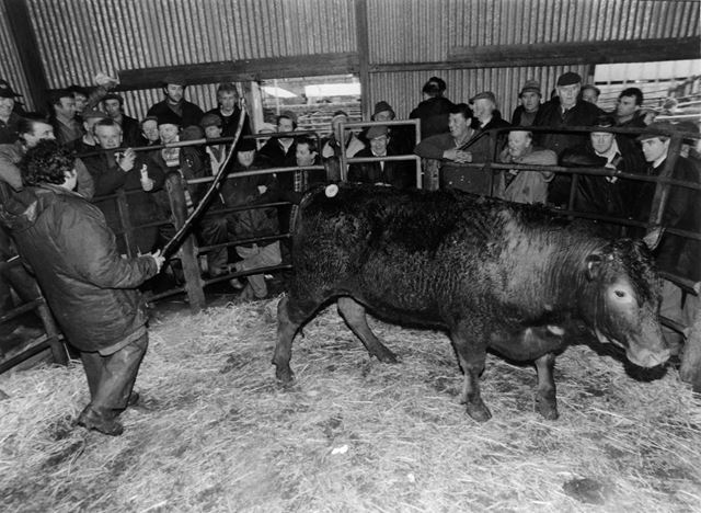 Cattle auction indoors, Old Cattle Market, Granby Road, Bakewell, 1996
