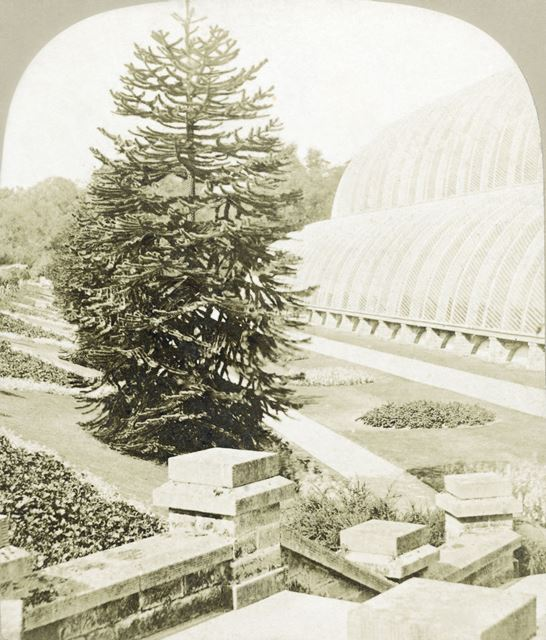 Conservatory, Chatsworth Gardens, Chatsworth, c 1868