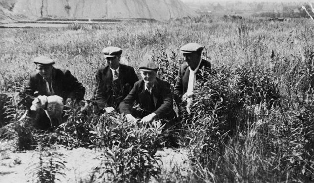 Group of men in a field with Jack Russell Dog