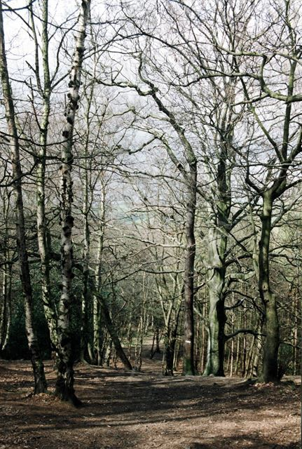 The Moss Valley Woods in winter