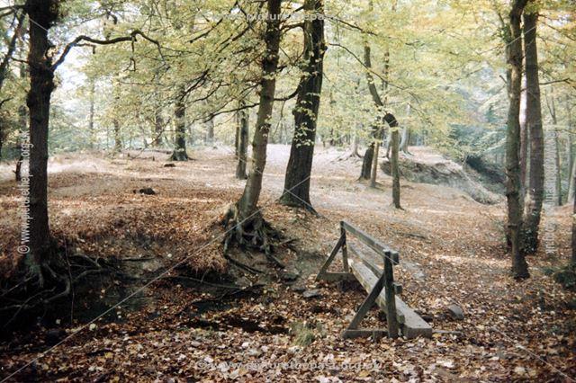 Moss Valley Woods