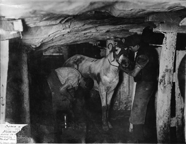 A Blacksmith and his striker attending a pit pony, Clay Cross Colliery, No 2 pit, c 1910