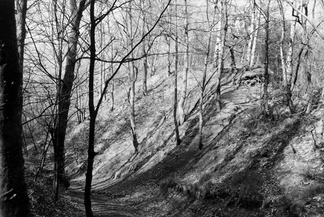 Woods on the Spoil Heaps from the Eckington Plumbley Colliery (Known locally as 'Seldom Seen' collie