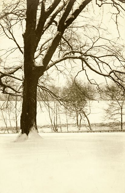 Darley Park in the snow.