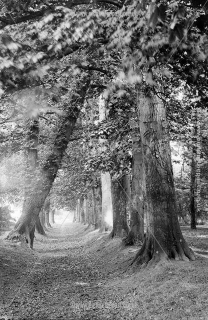 Strutt's Park, Derby, 1880