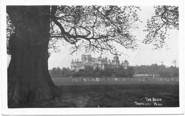 The Deer, Thoresby Park