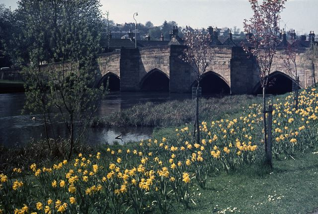 Bakewell Bridge and Daffodills, Bridge Street, Bakewell, c 1970s