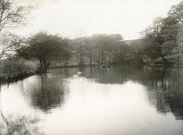 Millpond at Tansley Cotton Mill, Tansley, c 1905 ?