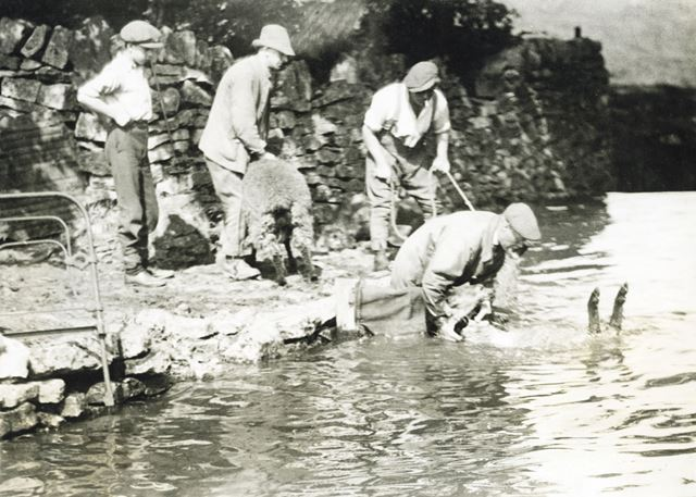 Sheep washing, Hope Valley, c 1930s ?