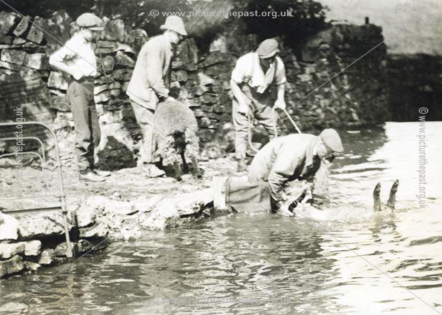 Sheep washing, Hope Valley, c 1930s ?