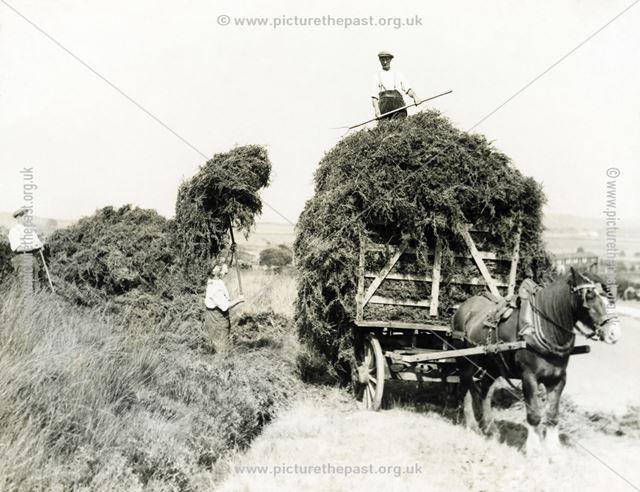 Harvesting bracken beside Hathersage Road, Dore, South Yorkshire, undated