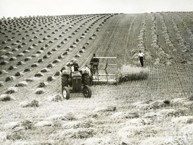 Tractor and binder harvesting, near Bridlington, East Riding of Yorkshire, c 1955 ?