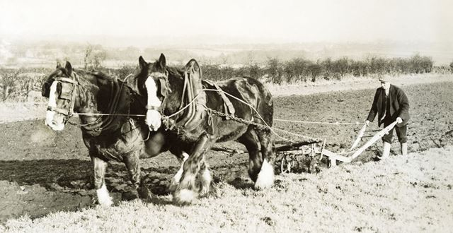 Ploughing with horses at unknown location, undated