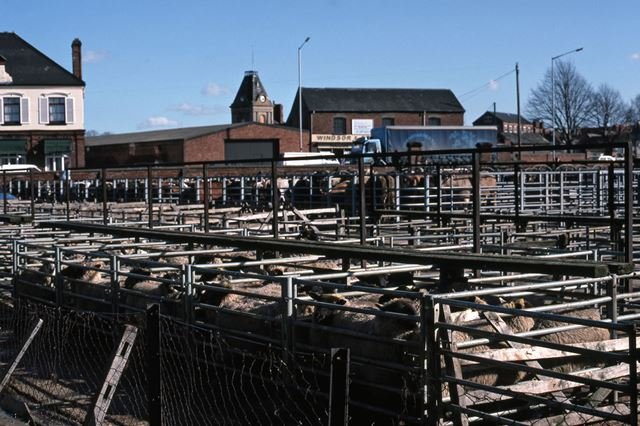 Sheep Pens with Cattle Behind, Auction Buildings, Cattle Market, Tolney Lane, Newark, 1990
