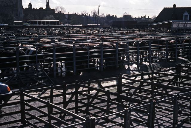Cattle Pens from Great North Road, Cattle Market, Newark, 1990