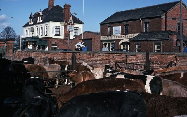 Cattle After Auctioning, Adjacent to Gt. North Road, Cattle Market, Tolney Lane, Newark, 1990