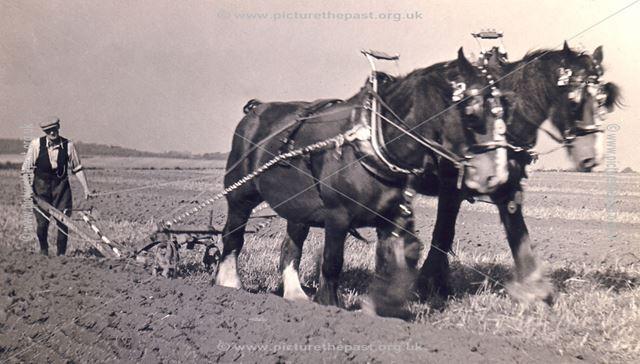 Arthur Featherstone, Thorntons Farm, Thurgarton, 1950s