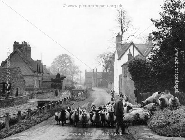 Dick Thornton with Sheepflock, Beck Street, Thurgarton, 1960s