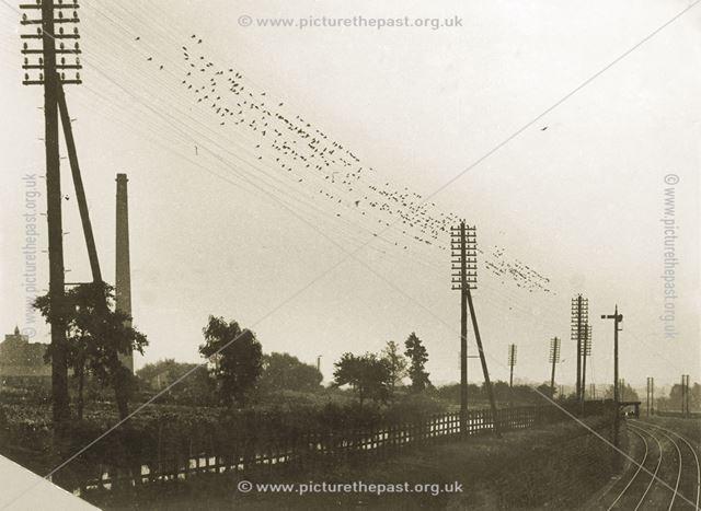 Birds on Lineside Cables, Railway nr Borrowash, towards Long Eaton