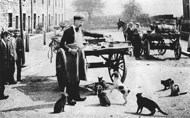 Local fishmonger selling his wares (surrounded by local dogs and cats!), Lambgates, Hadfield, c 1910