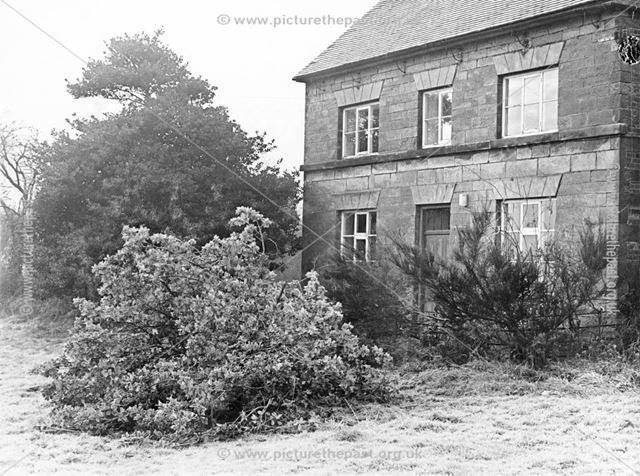 Holly Trees, Twyford