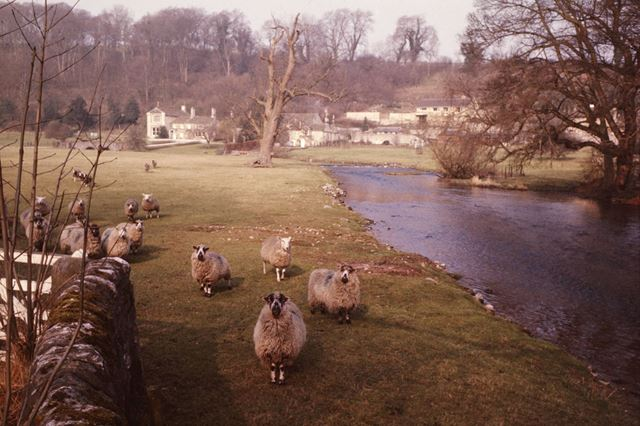 A pastoral scene with sheep, near Sheepwash Bridge, Ashford in the Water