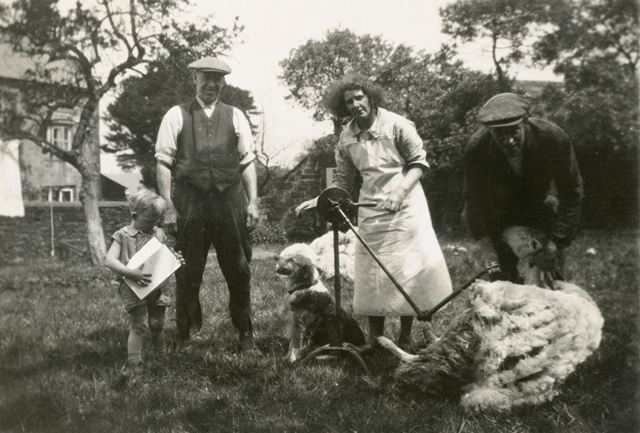 Sheep Shearing at Road Nook farm, Road Nook Farm, Brackenfield, c 1930s