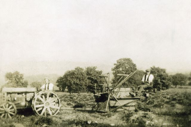 Harvesting with a Reaper, Dethick, c 1930s