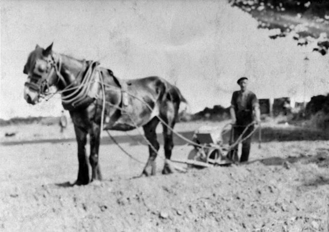 Ron Fisher of Hall Farm with horse drawn seed drill