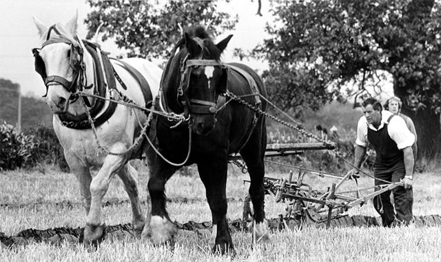 Eric Madeley in a ploughing match at Elvaston Castle